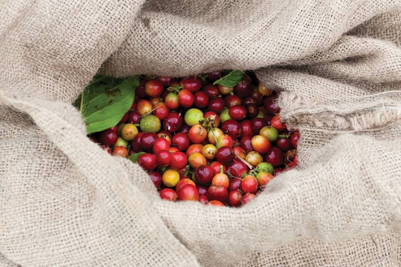 14. We can eat the coffee cherry as food