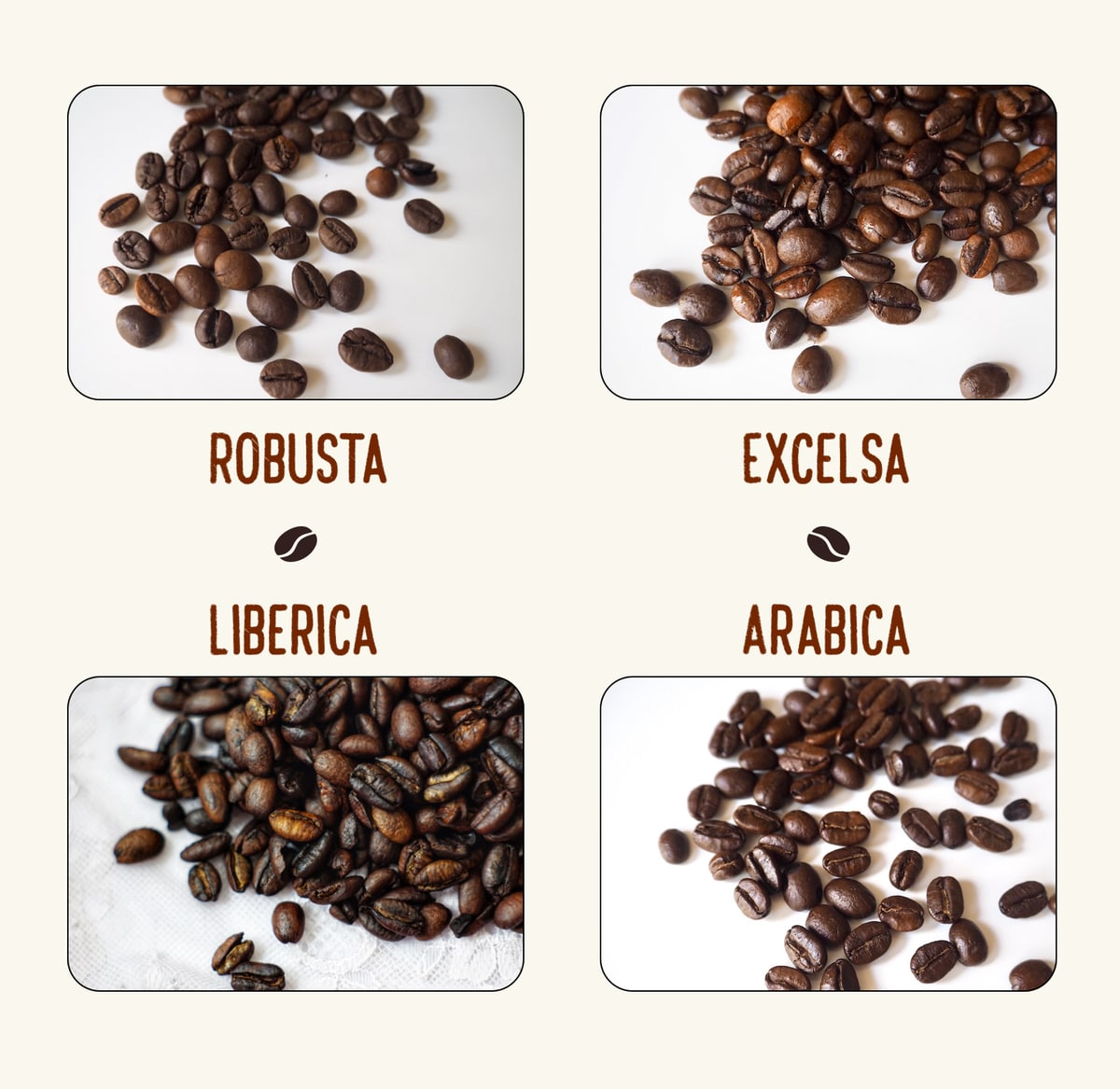 Wisely choose the certain type of coffee bean to suit your taste
