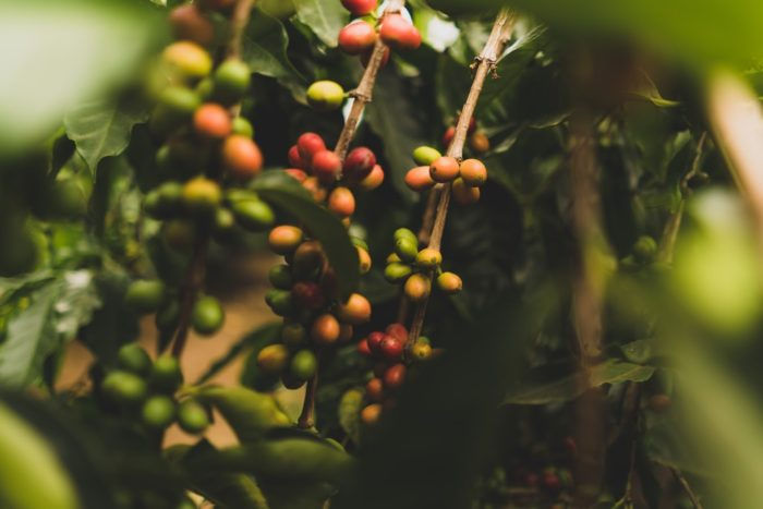 3. You know where your coffee comes from