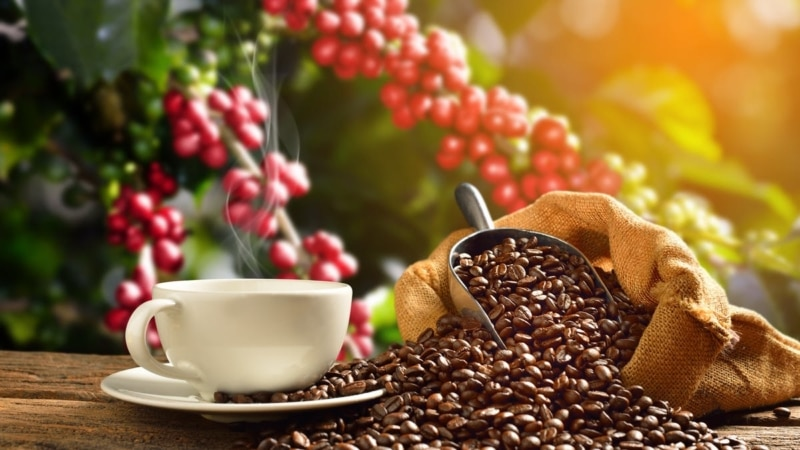 9 Powerful Ways That Coffee Impacts The World intro