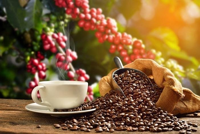 What is organic coffee?