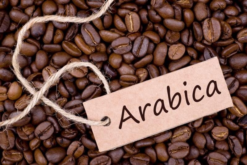 Coffea Arabica (~60–70% of the coffee market)