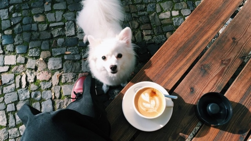 Why Coffee is Dangerous to Your Pet